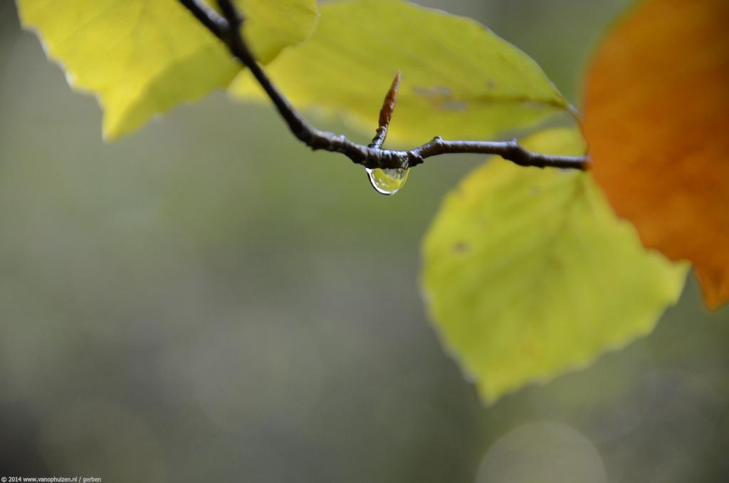 herfst-2012-03
