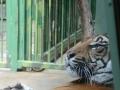 Zomervakantie Tsjechie 2014 (428) - Zoo Praag
