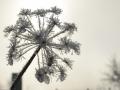 winterfotos-2012-01