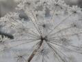 winterfotos-2012-02