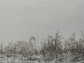 winterfotos-2012-03
